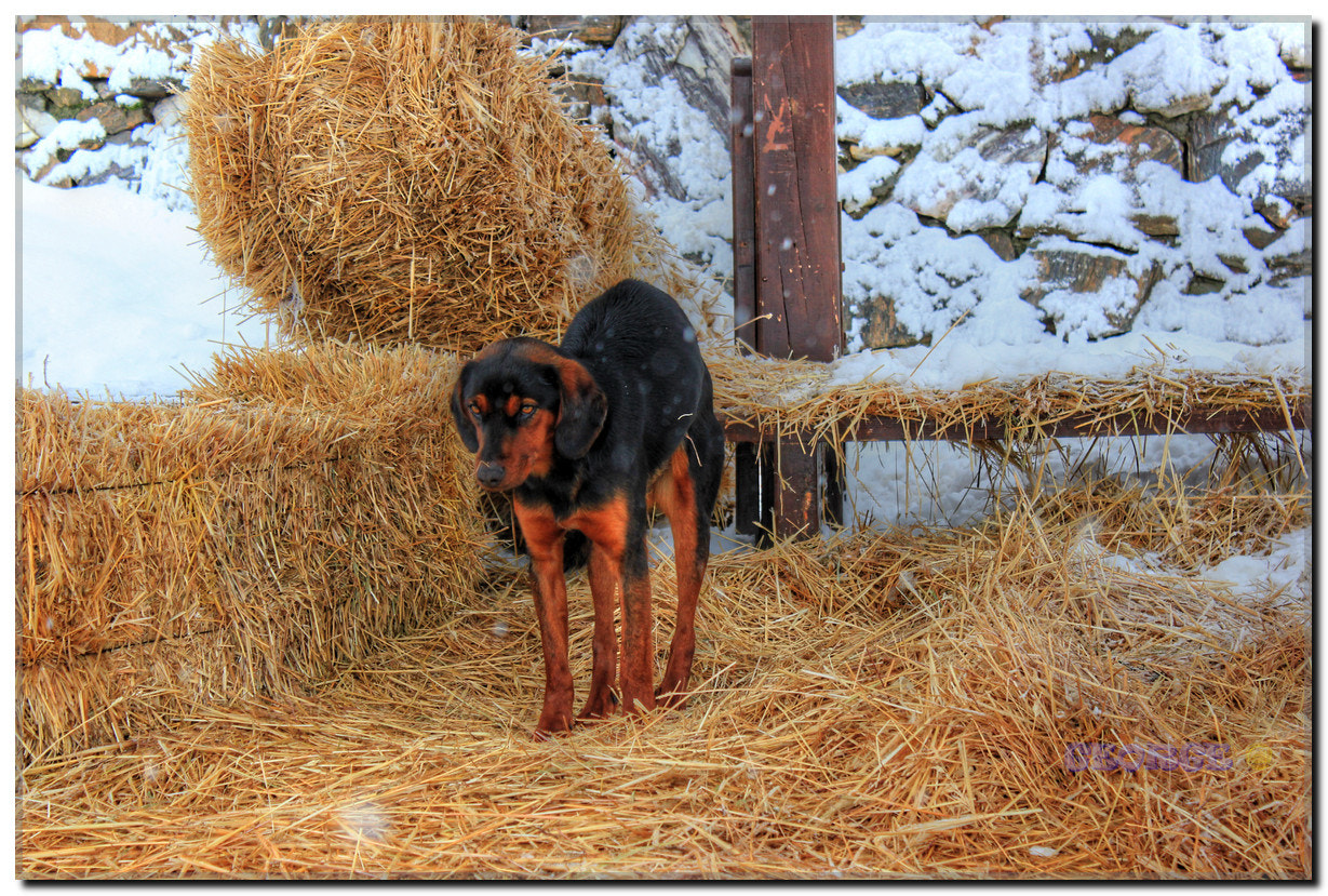 Photograph Dog taking the numbness out  - Home! Sweet Home! George @ by George @  on 500px