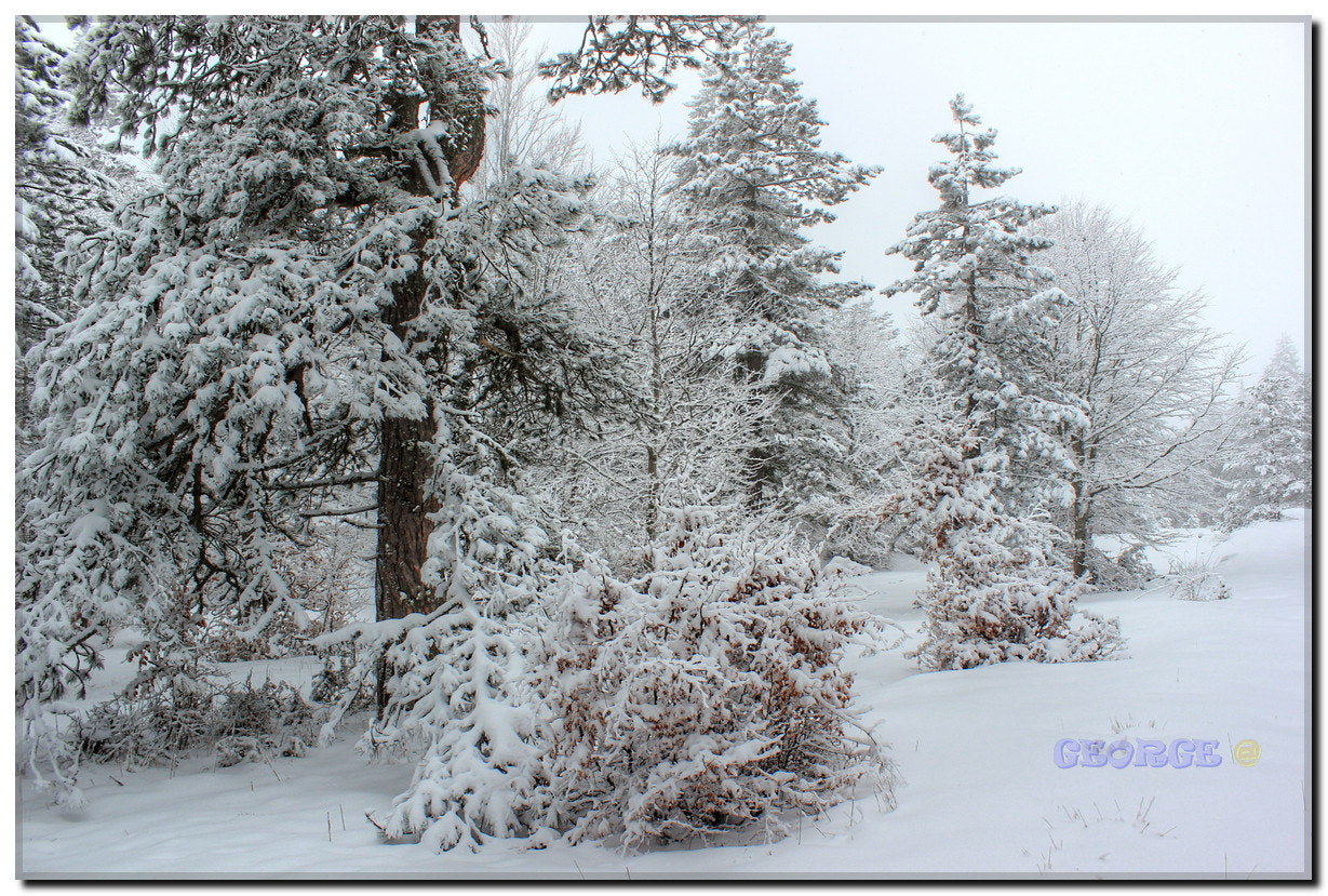 "Photograph Winter Beauty snowy mountains Forest landscape ""As the Snow Falls"" - George @  by George @  on 500px"