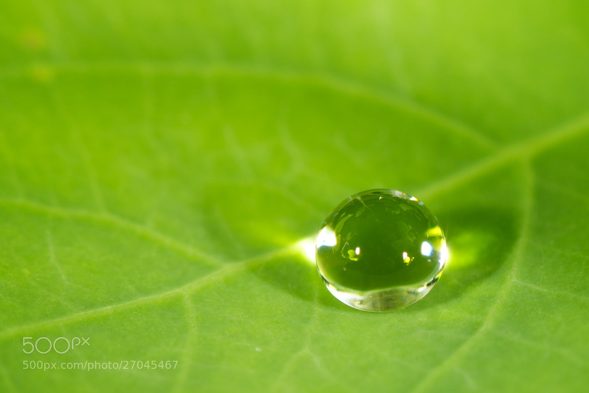 Photograph Water drop by Mahmud Ahsan on 500px