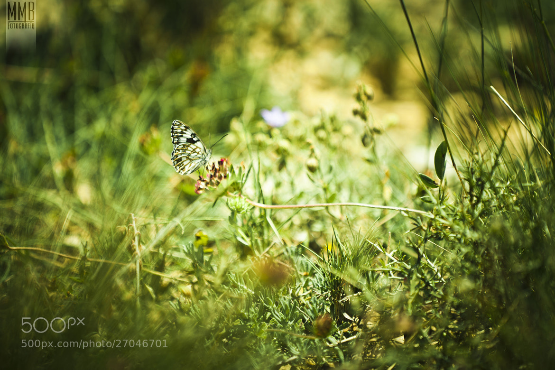 Photograph Hidden butterfly by MMB Fotografía Adolfo Gris on 500px
