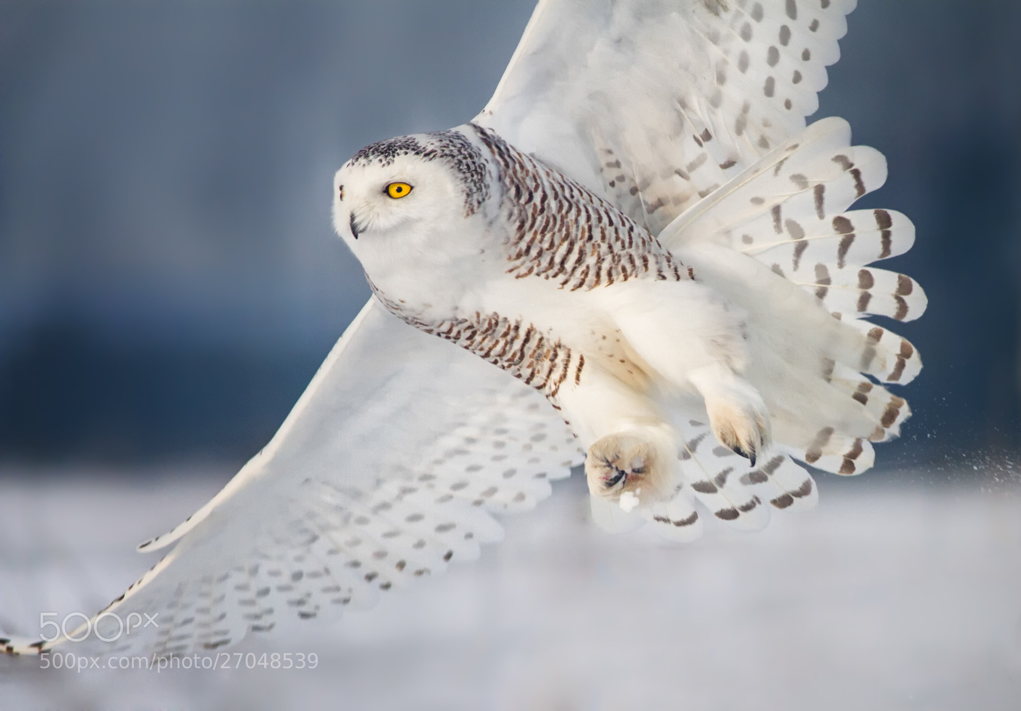 Photograph The Catch! by Christopher Cove on 500px