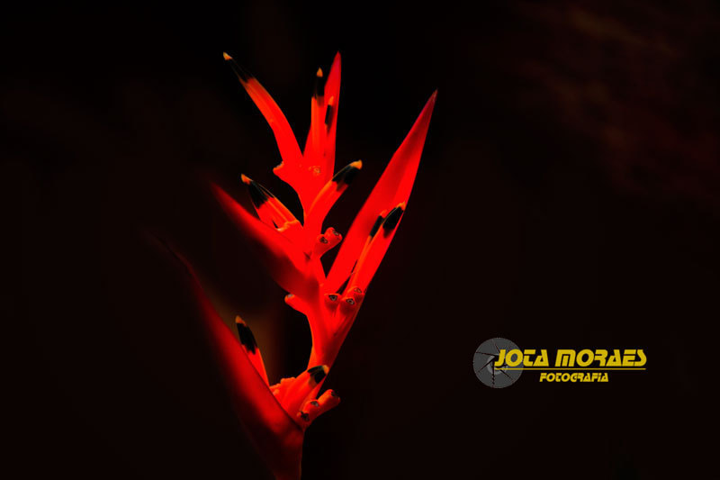 Photograph Fire by jota moraes on 500px
