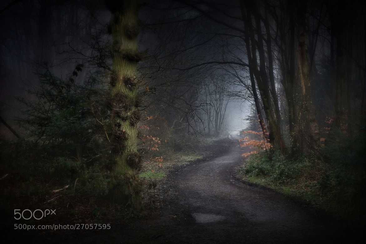 Photograph Out of the mist by Phil Martin on 500px