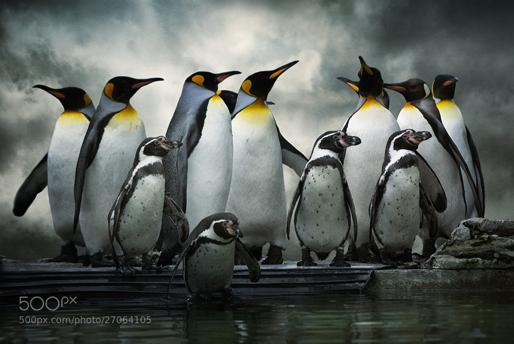 Photograph Penguin Huddle by Audran Gosling on 500px