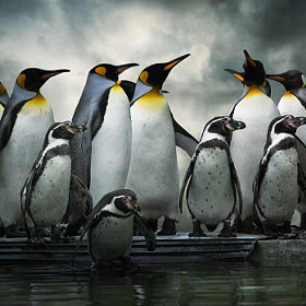 Penguin Huddle by Audran Gosling on 500px.com