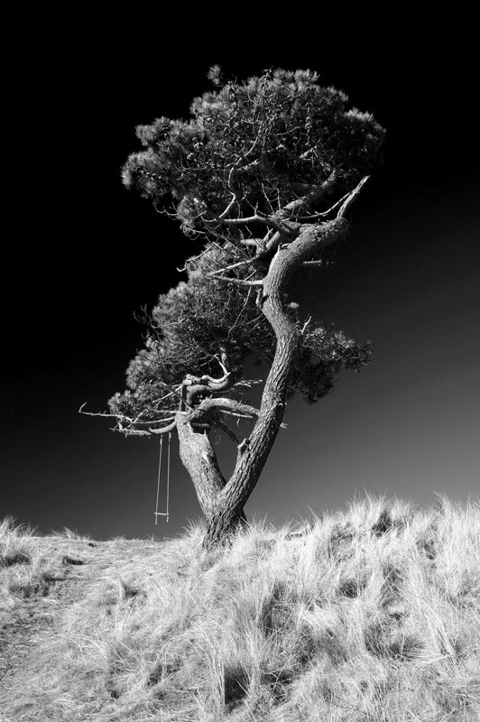 Photograph The Tree Swing, Littleferry, Golspie, Sutherland, Scottish Highlands by Heather Leslie Ross on 500px