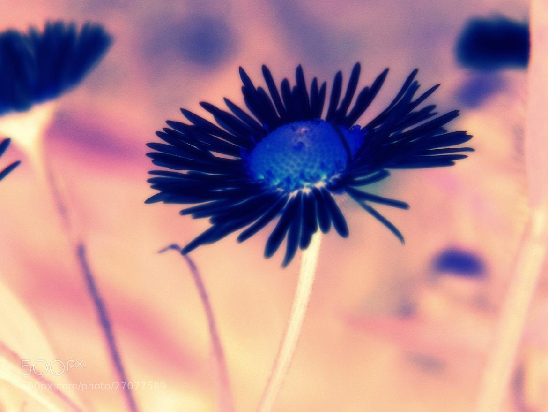 Photograph Last Flower by Marta Węgierska on 500px