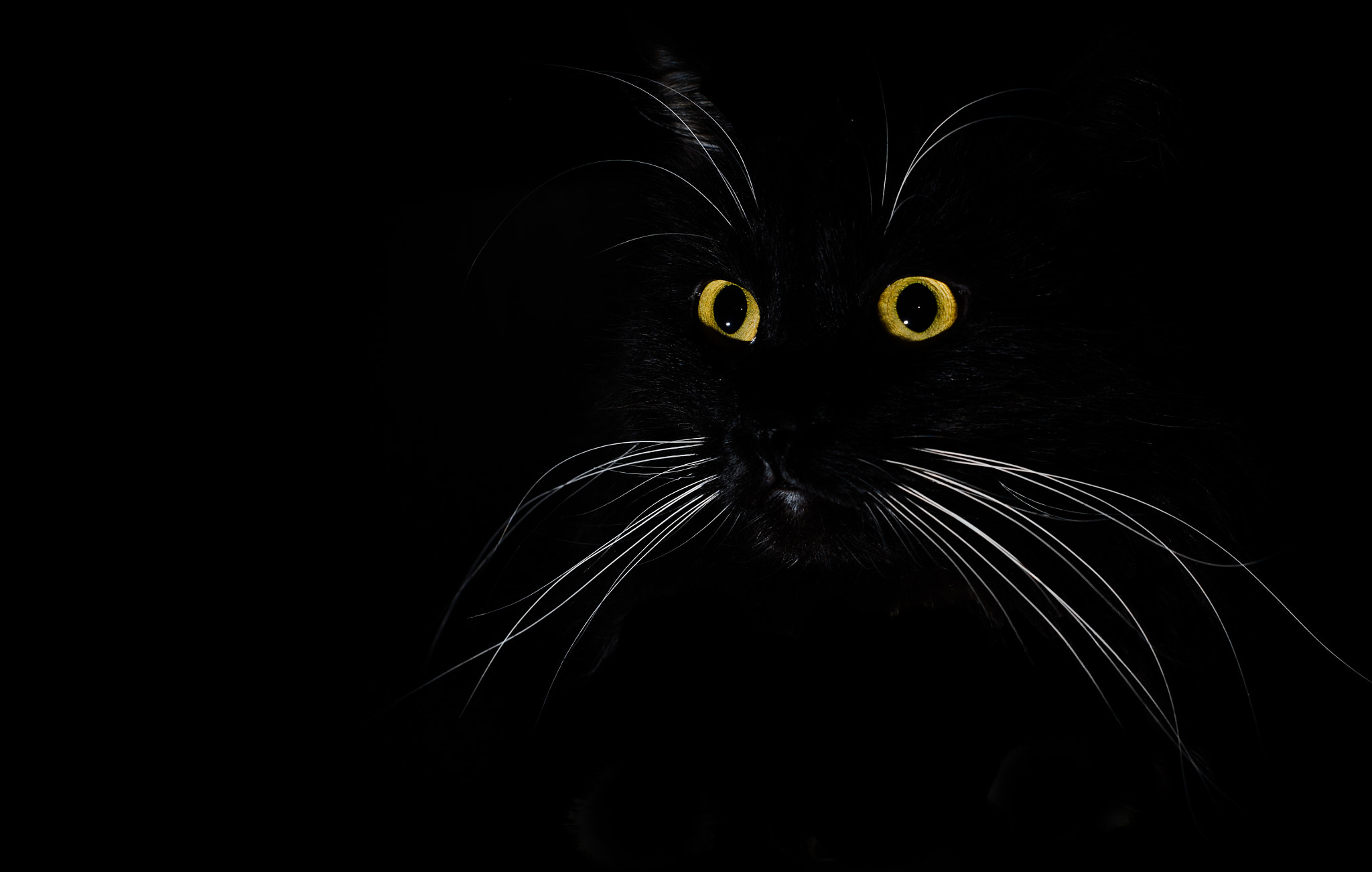 Photograph a portrait of a black cat in a dark room by Eugene Shmulev on 500px
