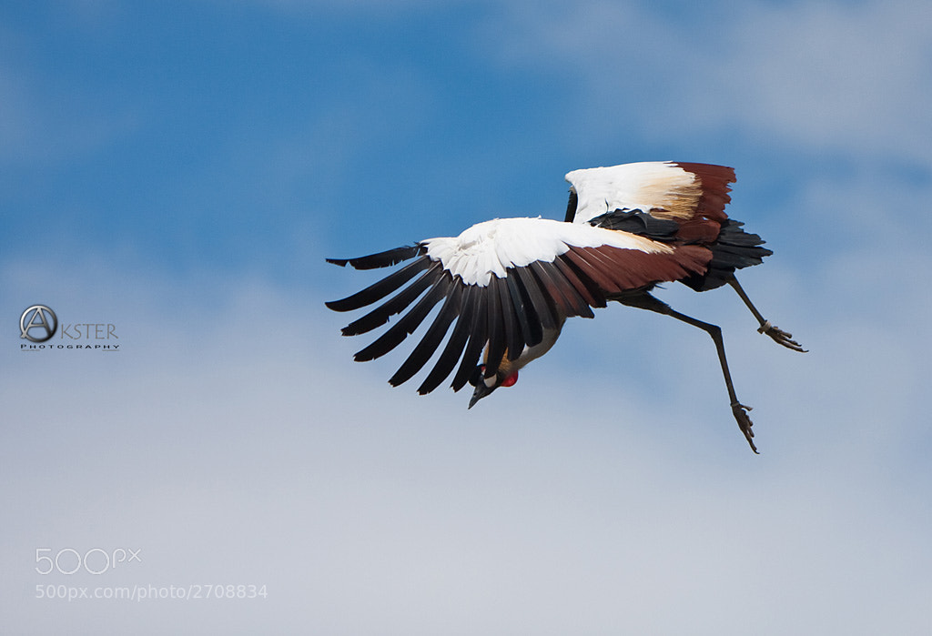 Photograph Landing by Guido Akster on 500px
