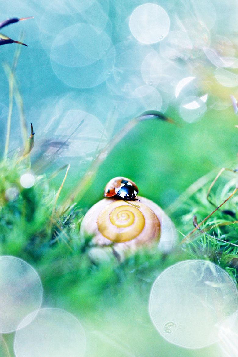 Photograph The snail and the Ladybug by Sébastien DEL GROSSO on 500px