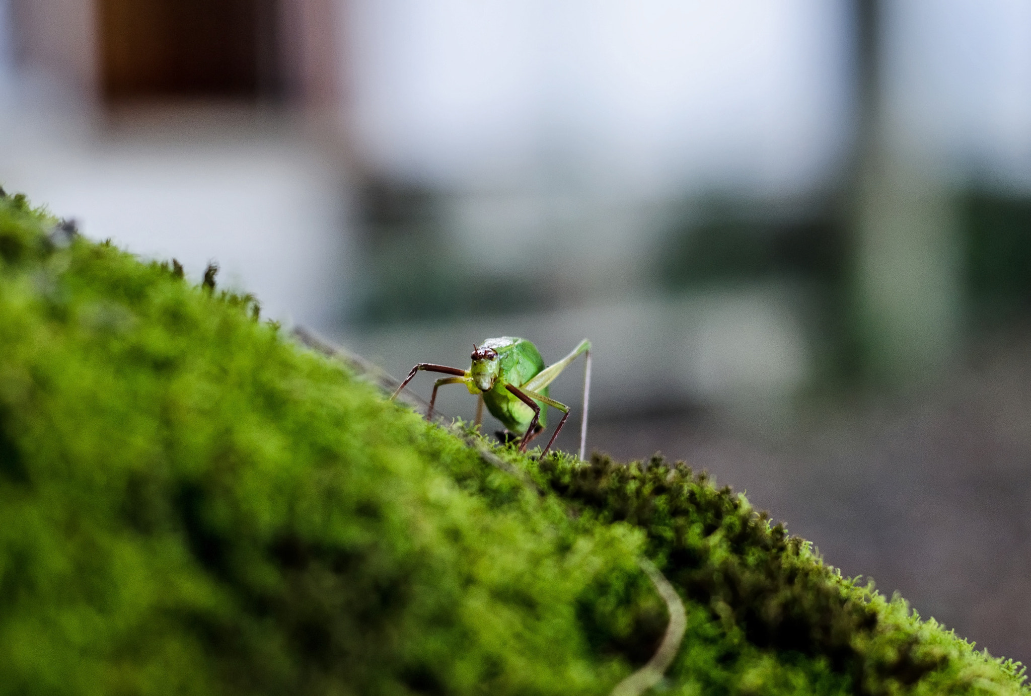Photograph Insect by Francisco  Pérez Phillips on 500px