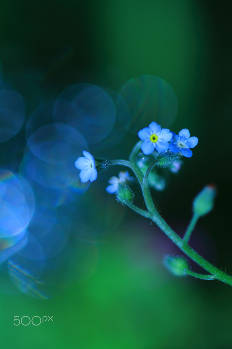 Photograph Faint whisper of Spring by Shihya Kowatari on 500px