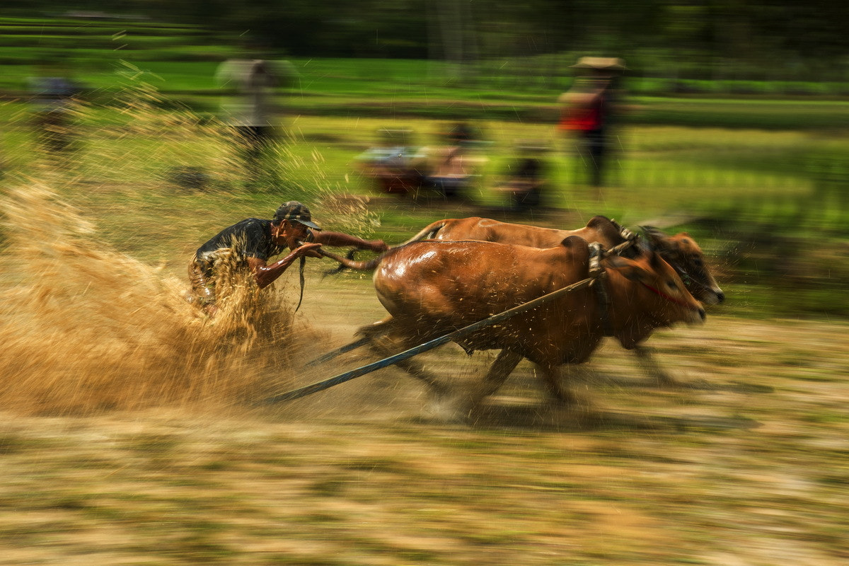 Photograph Panning by SIJANTO NATURE on 500px