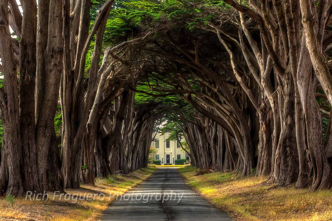 Photograph Tunnel of Trees by fraguero1 on 500px