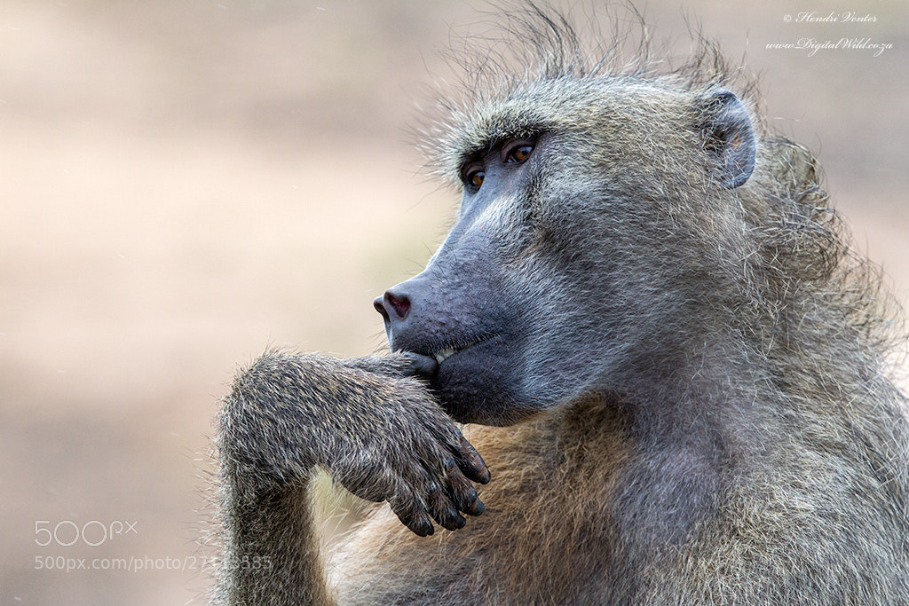 Photograph The Thinker by Hendri Venter on 500px