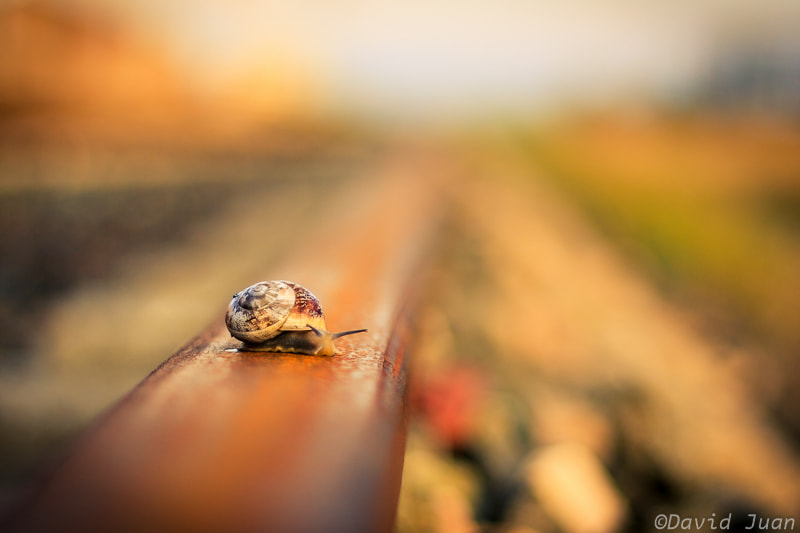 Photograph Snail on the rail by David Juan on 500px
