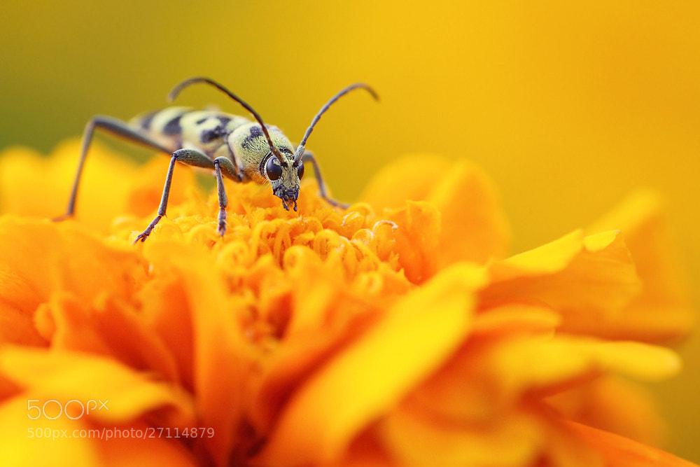 Photograph Orange by Hencz Judit on 500px