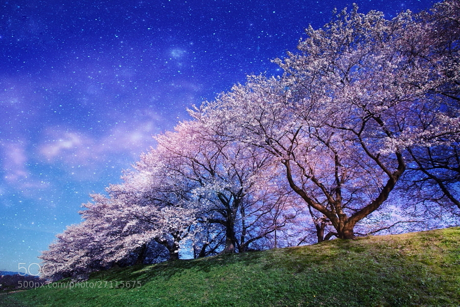 Photograph Dreamy by AKITO  on 500px