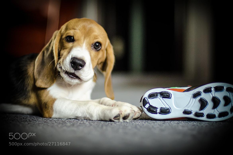 Photograph My puppy II by Dmitry Kukushkin on 500px