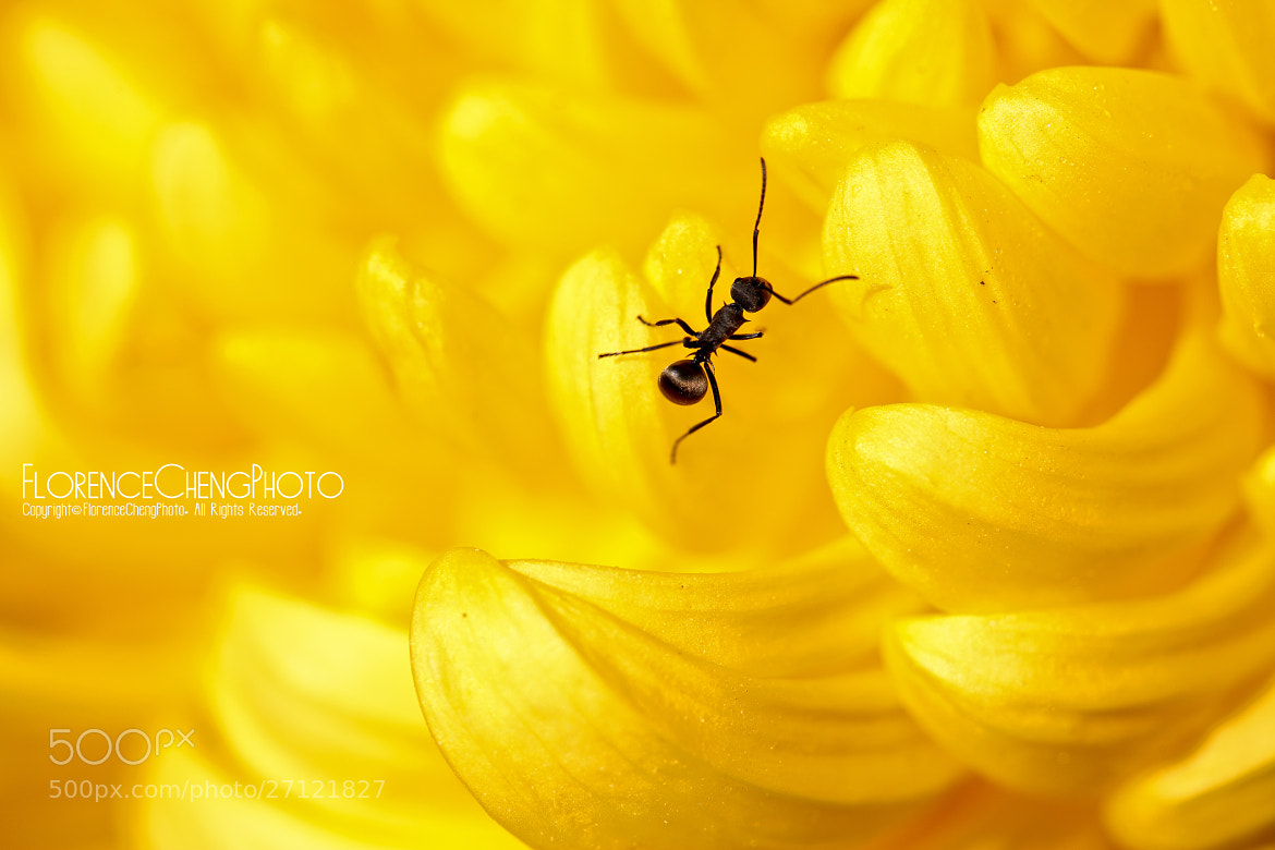 Photograph Walking on the flower by Florence Cheng on 500px