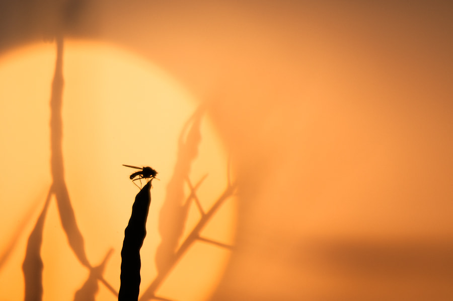Photograph Sunset by Sidney Bovy on 500px