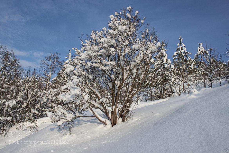 Photograph Winter tree by Olga Apostoliuk on 500px