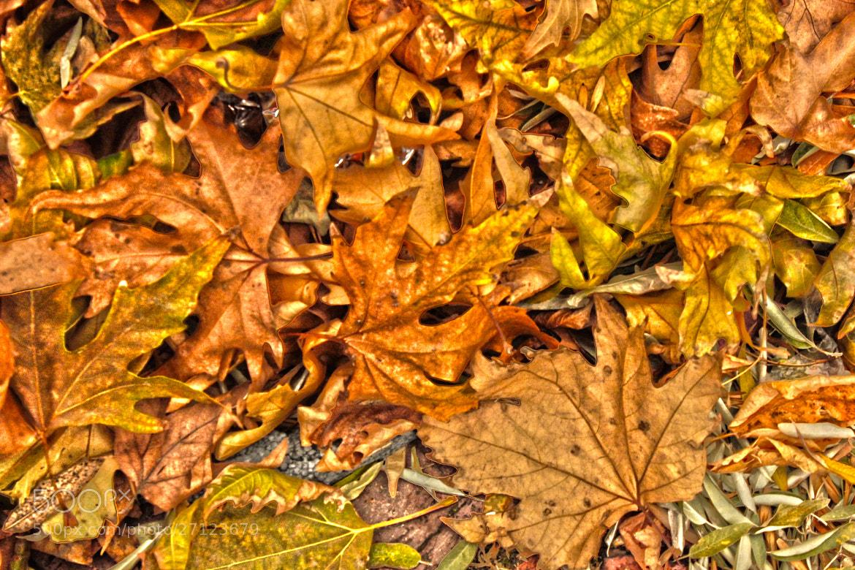 Photograph autumn by yalçın polat on 500px