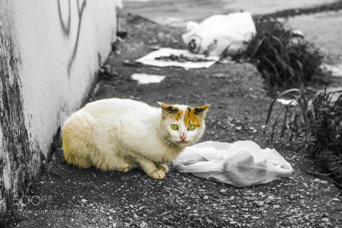 Photograph a hungry cat unlucky.. by yalçın polat on 500px