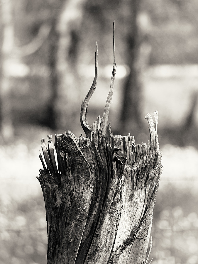 Toodyay Stump #1 by Paul Amyes on 500px.com