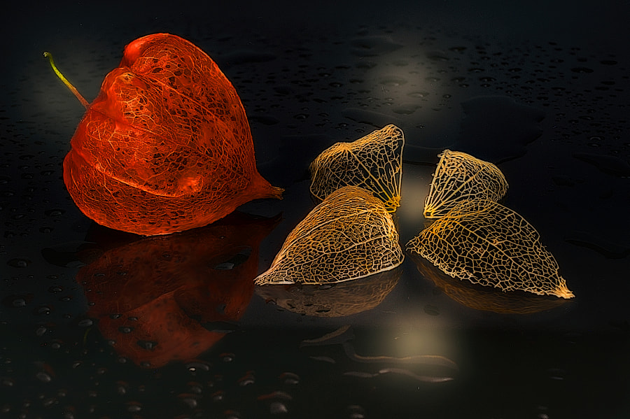 Physalis Nature Beautys by Erwin Staudt on 500px.com
