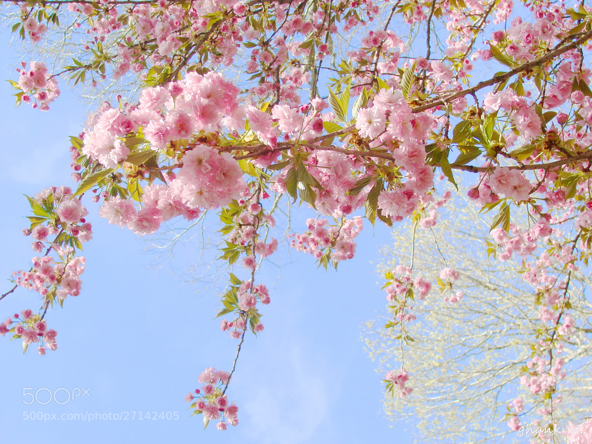 Photograph Blossom by Amy Smith on 500px