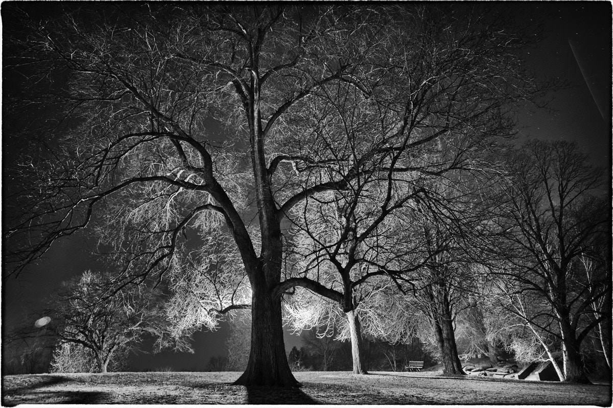 Photograph Winter Tree III by jlsantiago on 500px