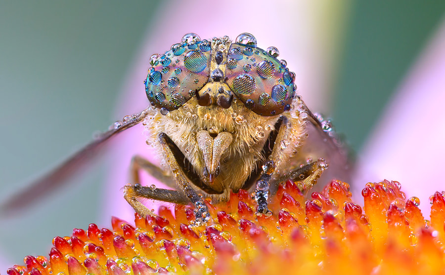 The eye of the fly by Johan Scholtens on 500px.com