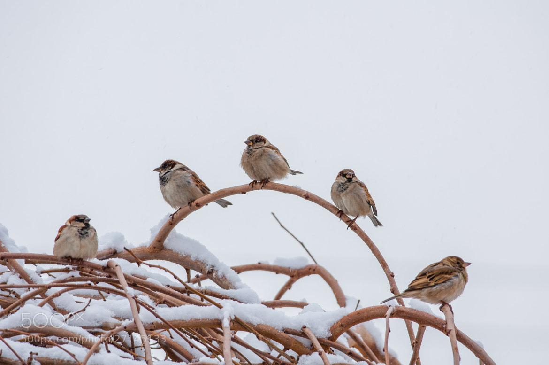 Photograph Bird 03 Sparrow by Hosein Esmaeelbegi on 500px