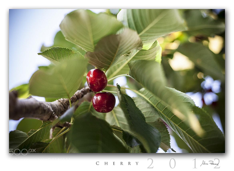 Photograph Cherry by Antonio Perrone on 500px