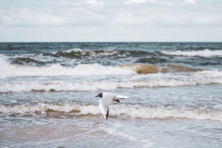 Surfing Seagull, автор — Jack Orion на 500px.com