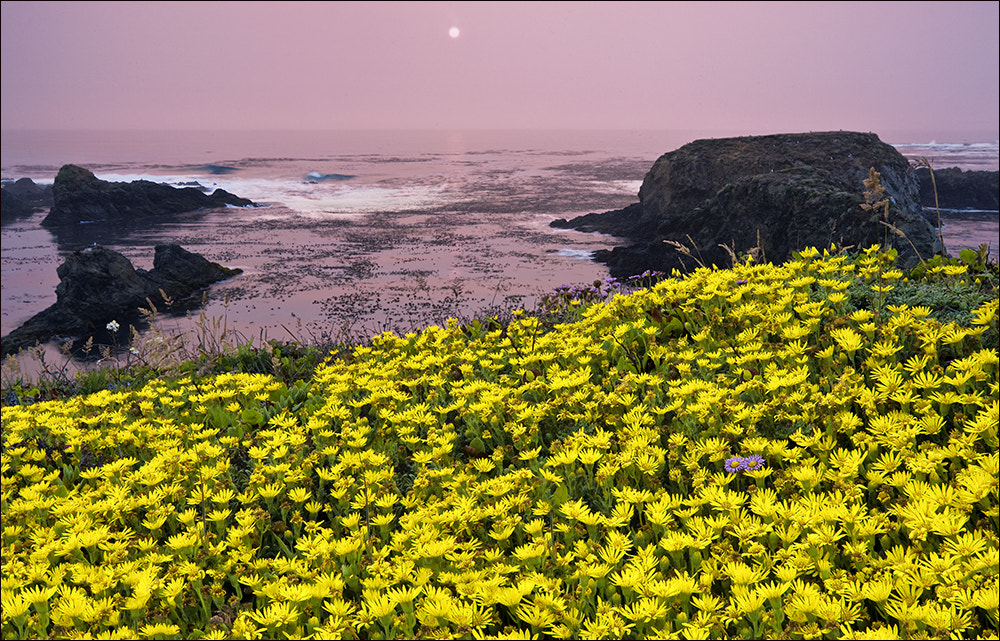 Photograph The Odd Couple - Mendocino Coast, California by Don Smith on 500px
