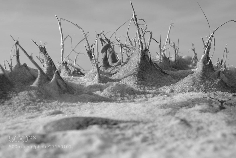 Photograph Winterlicher Strand  aus der Sicht eines Wattwurmes.  by diefarblosen-archiv on 500px
