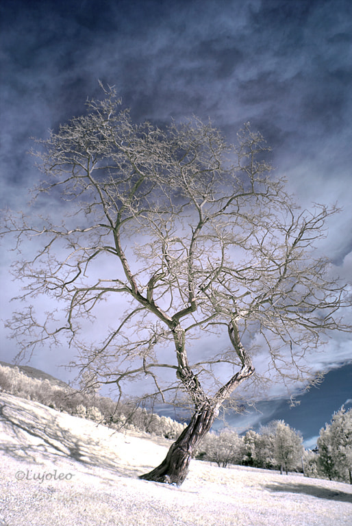Photograph The winter tree by Luis Cabal on 500px