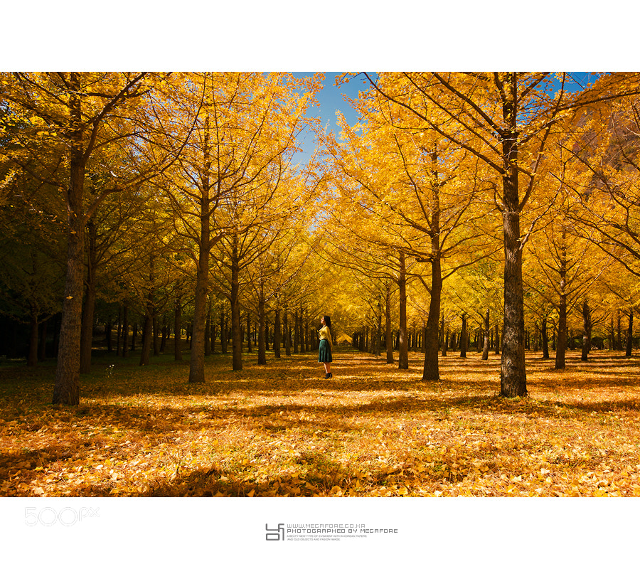 Photograph Ginkgo Forest by ingeun Nam on 500px