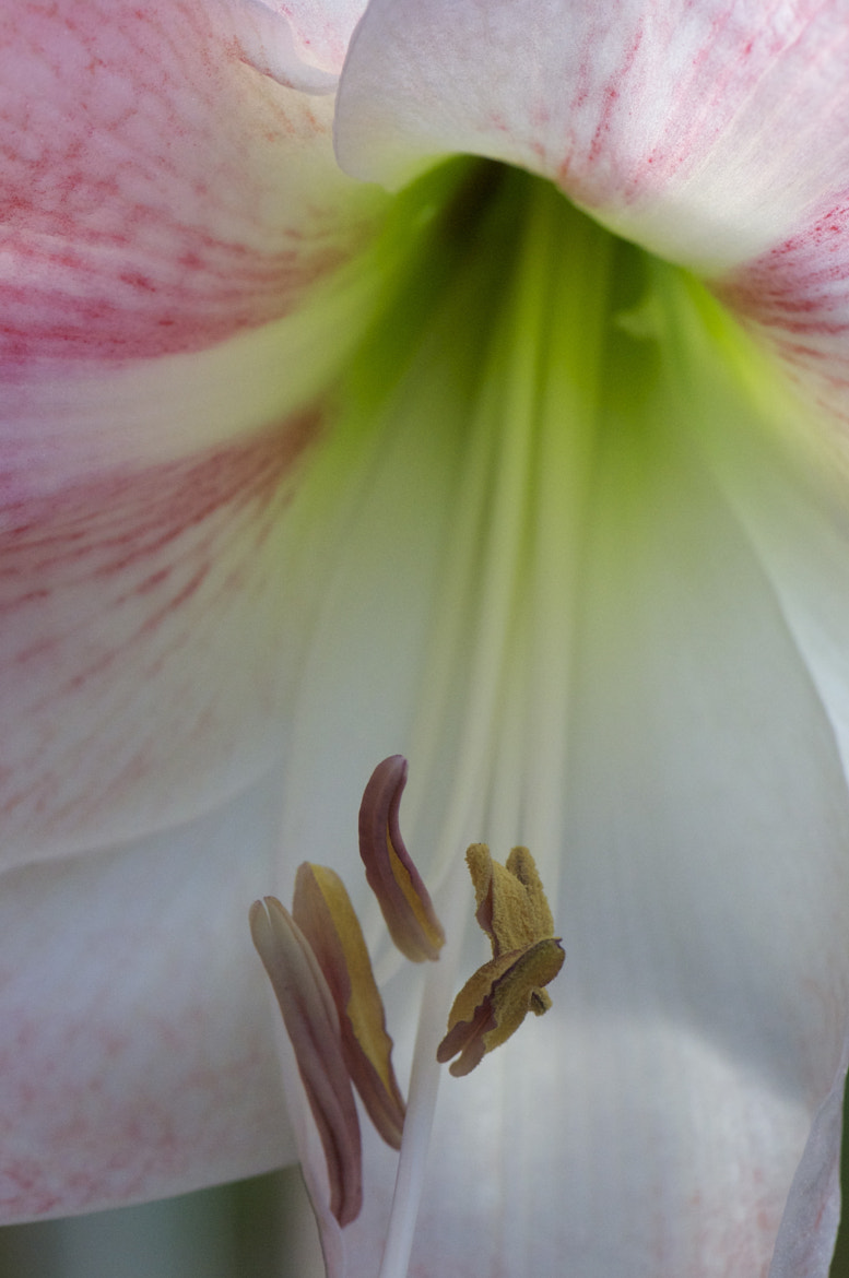 Photograph A Lily's Enchanting Charms by Leslie Tuchman on 500px