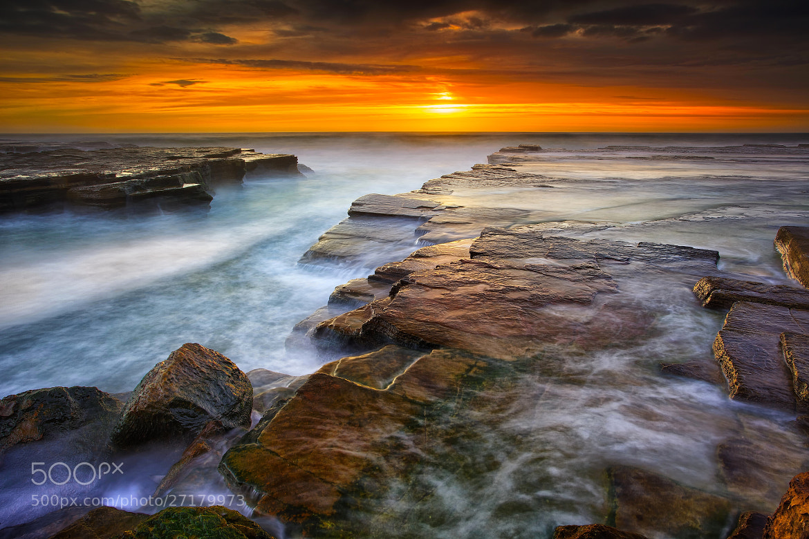 Photograph Sea Of Gold by Noval Nugraha on 500px