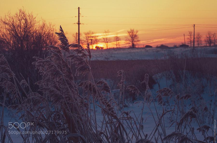 Winter sunrise by Tolik Maltsev on 500px.com
