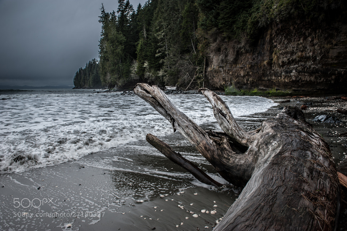 Photograph Driftwood at China Beach by Alan Story on 500px