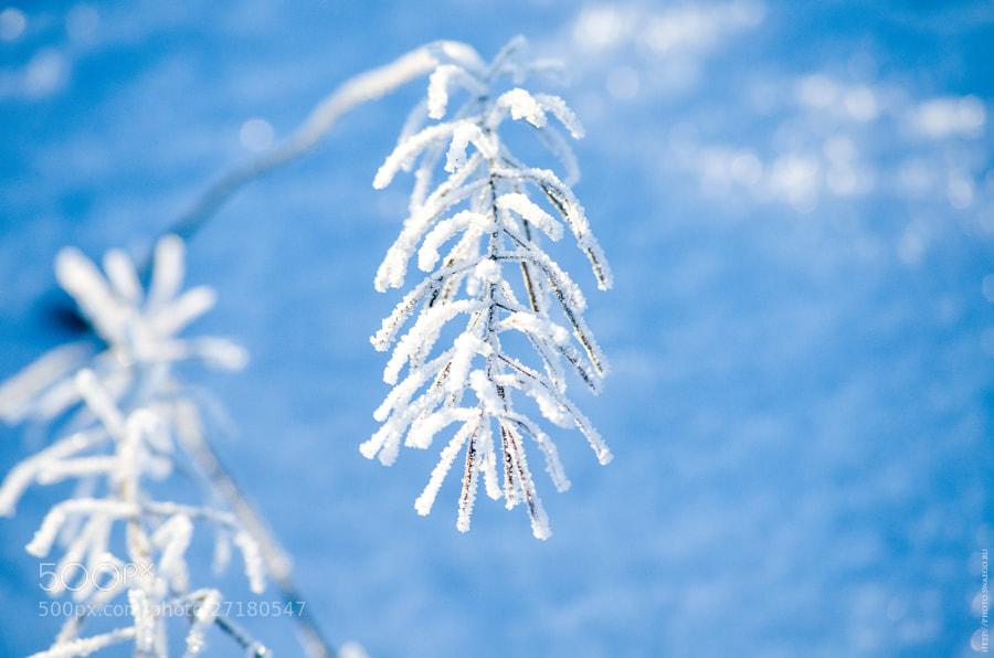 white frost by Tolik Maltsev on 500px.com
