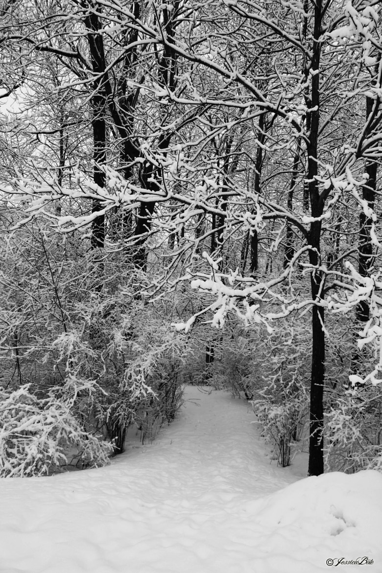 Photograph Winter/FEB2013 by Jessica Bate on 500px