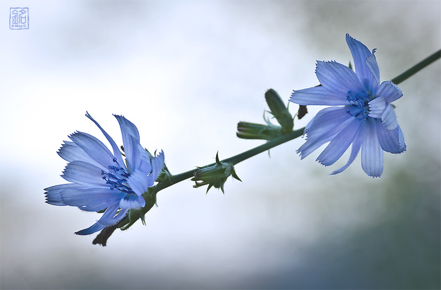 Photograph In Blue Dreams by Ming Gullo on 500px