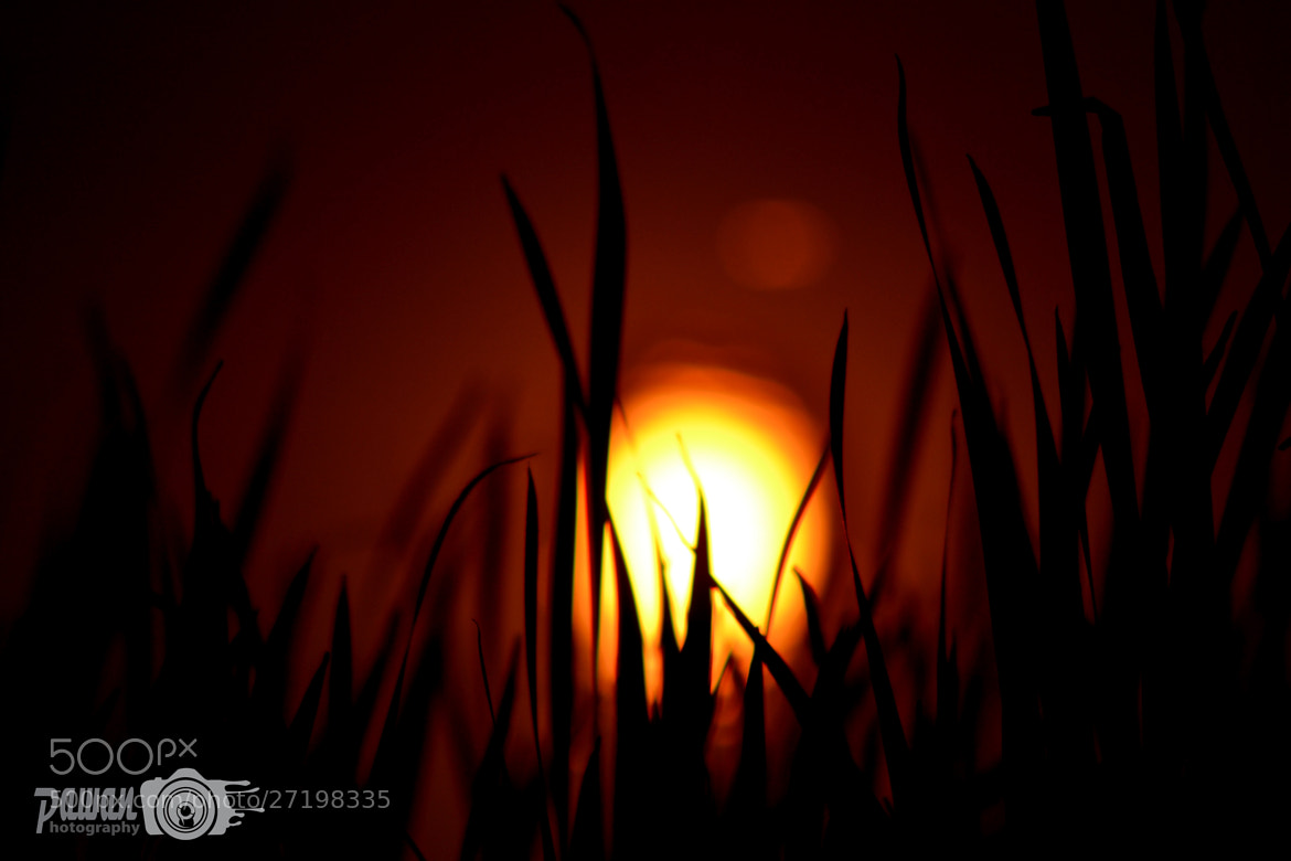 Photograph Peaceful Evening.... by Pawan More on 500px