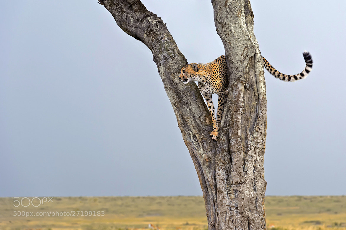Photograph Treetop lookout by Marc MOL on 500px