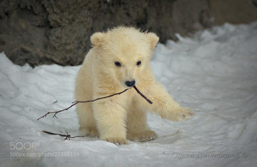 Photograph Baby. by Olga Dmitrieva on 500px